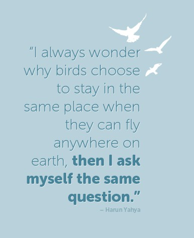 I always wonder why birds choose to stay in the same place when they can fly anywhere on earth